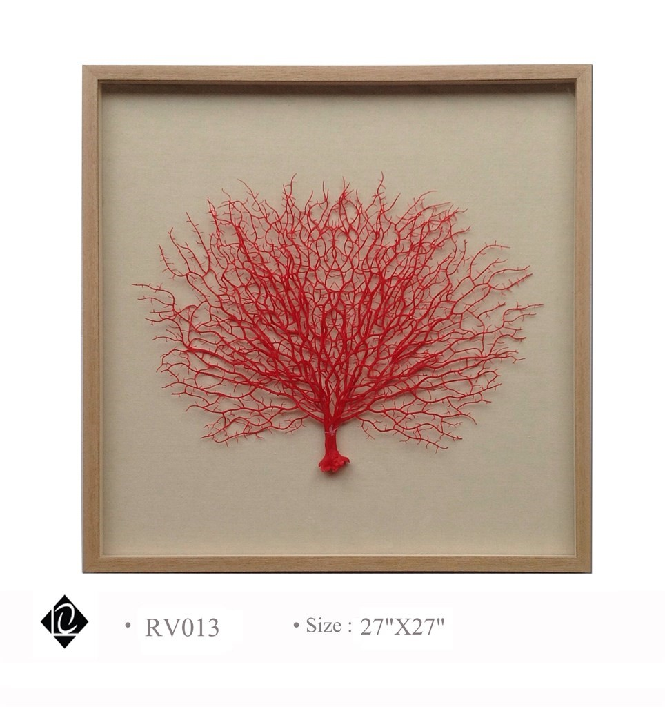 Framed Red Sea Fan